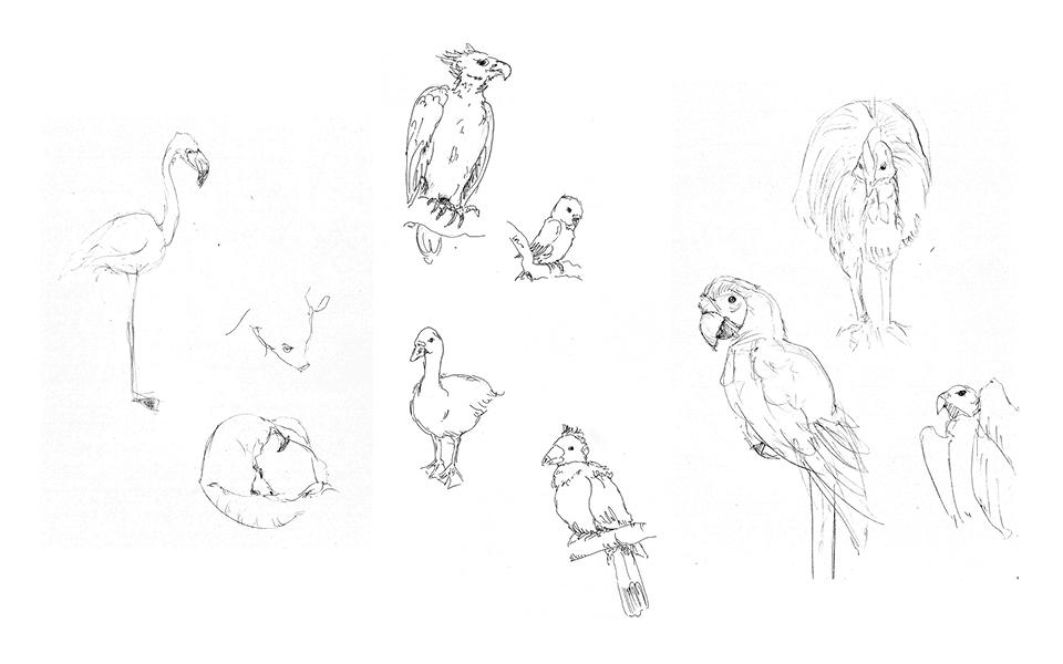 Animal Sketches 1 - San Diego