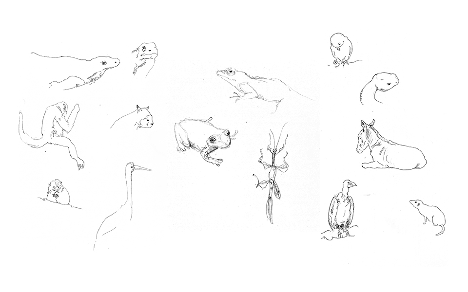 Animal Sketches 2 - San Diego