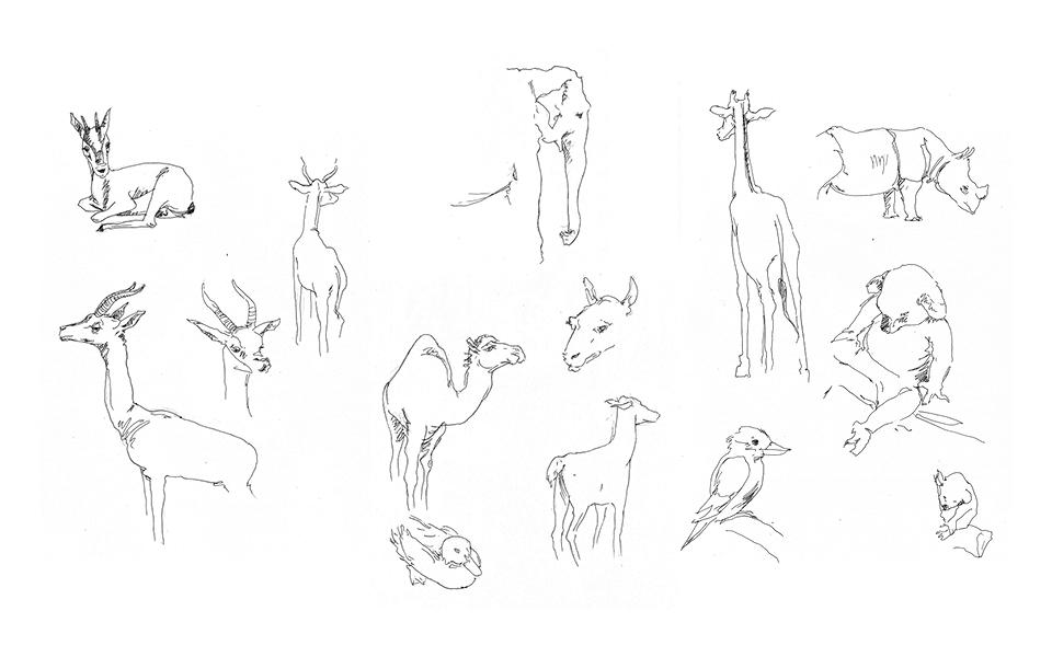 Animal Sketches 3 - San Diego