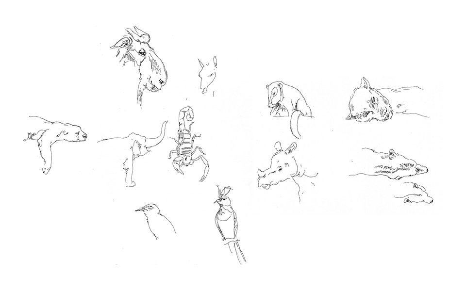 Animal Sketches 4 - San Diego
